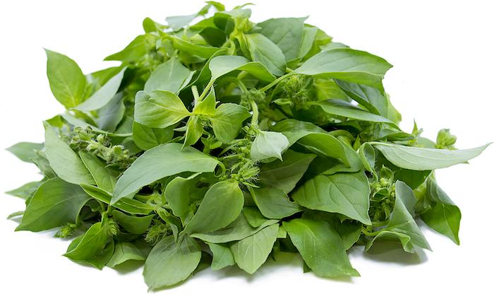 eine pflanze mit grünen blättern blätter von limonenbasilikum wie kann man wespen vertreiben mit hausmitteln ein wespennets entfernen