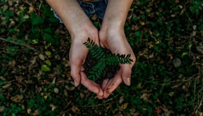 ausgestreckte Hände voll mit Erde und grüner Pflanze, Foto in einem Park, JTB Communication Design, Nachhaltigkeit im Event Management