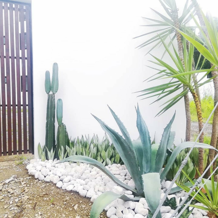 steinbeet anlegen weiße steine große kakteen garten im zen stil agave tequilana pflanze