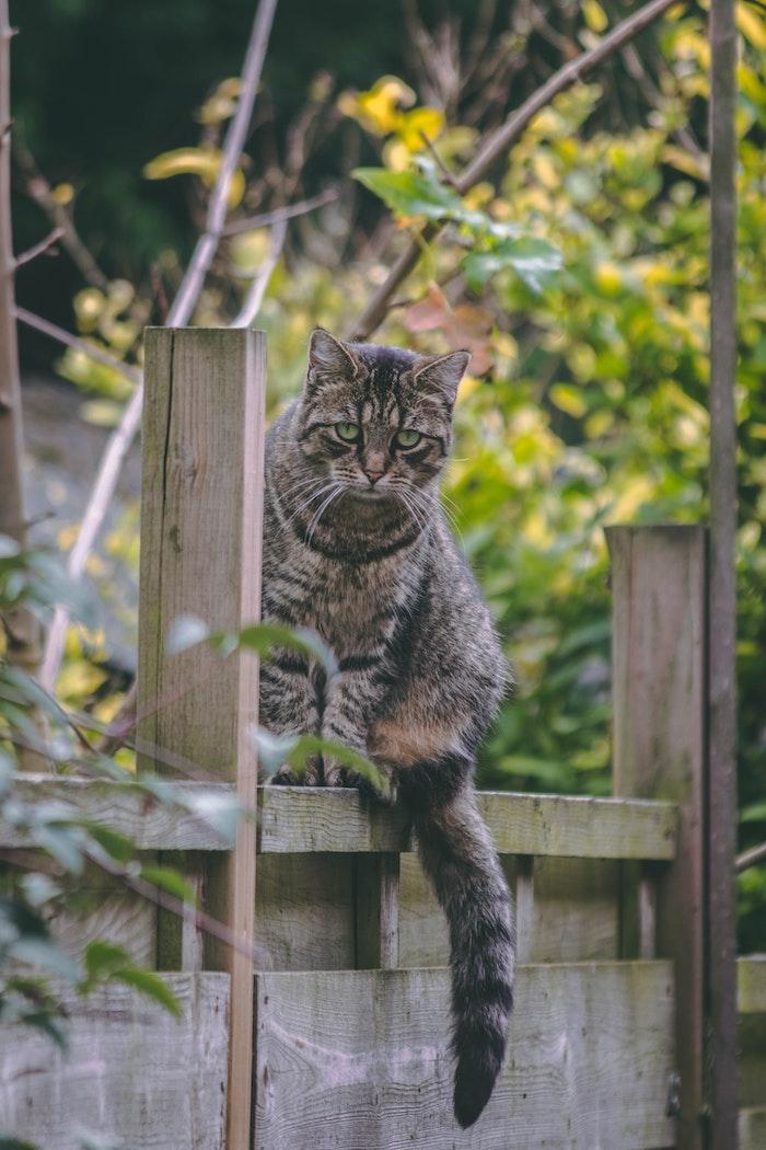 gartentor ein garten mit grünen pflanzen eine große graue katze mit grünen augen katzen vertreiben hausmittel