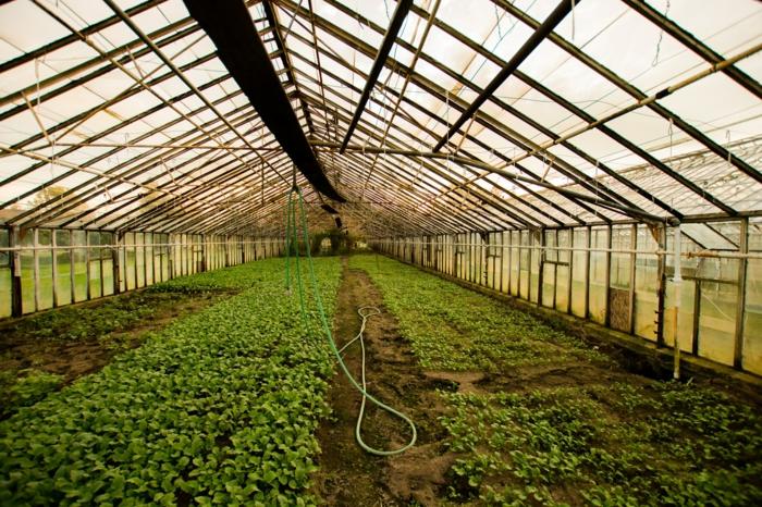 großes gewächshaus glas viele grüne pflanzen wie schützen sie ihre pflanzen im sommer im gewächshaus
