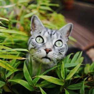 Hilfreiche Tipps, wie Sie die Katzen vertreiben