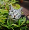 katzen vertreiben hausmittel eine graue katze mit großen grünen augen katzen aus garten vertreiben