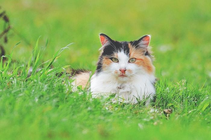 rasen und eine katze im garten tipps wie man katzen vertreiben hausmittel essig