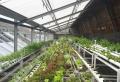 So schützen Sie Ihre Pflanzen im Gewächshaus im Sommer
