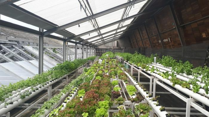wamadirekt de gewächshäuser aus glas kaufen tipps und ideen für schutz von pflanzen im sommer