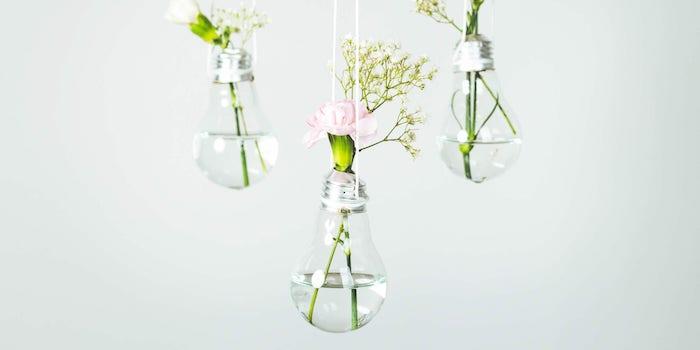 drei kleine glühbirne die als blumentöüpfe verwendet werden glühbirne mit wasser und grünen pflanzen