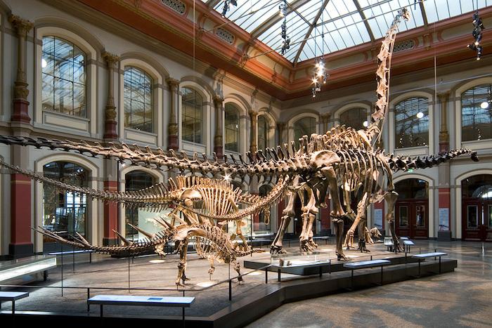 ein museem mit dinosauriern was kann man heute machen die museen in der eigenen stadt besuchen