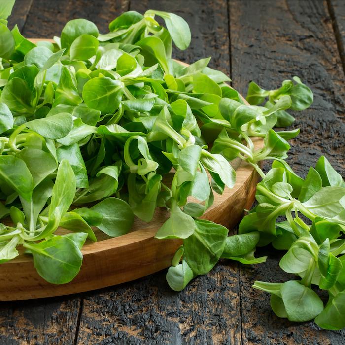 ist feldsalat gesund grüne blätter eines feldsalats ein teller aus holz mit feldsalat ein tisch aus holz feldsalat rezepte
