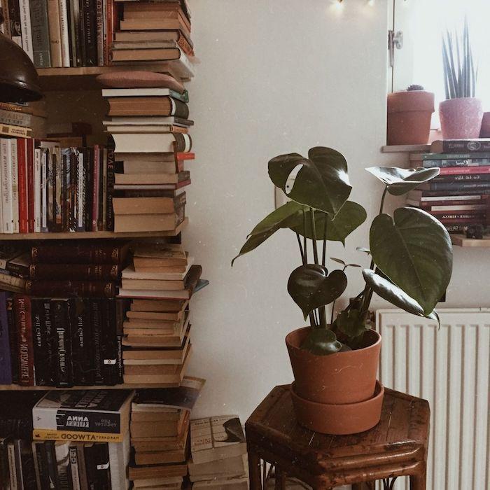 regal mit vielen büchern mittelgroße grüne pflanze vintage inneneinrichtung zimmer einirchten ideen runder tisch aus holz tumblr deko artikel