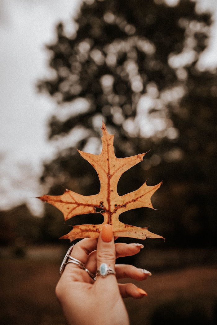 die trends bei den nagellack farben für den herbst farbe orange eine hand mit orangem nagellack und mit ringen blätter