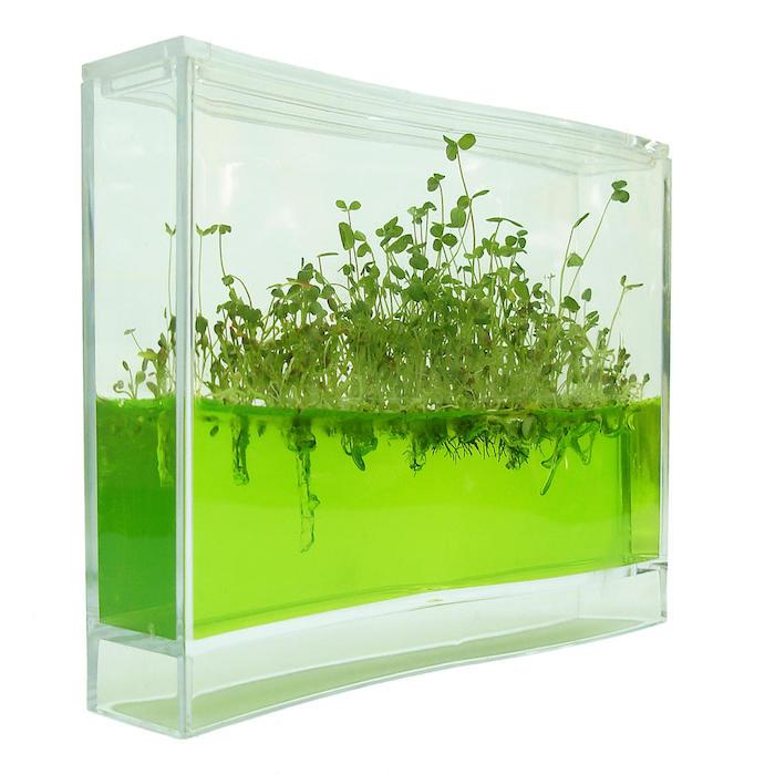 ein grüner plantarium mit grünen pflanzen idee für geschenk für einen hobbygärtner