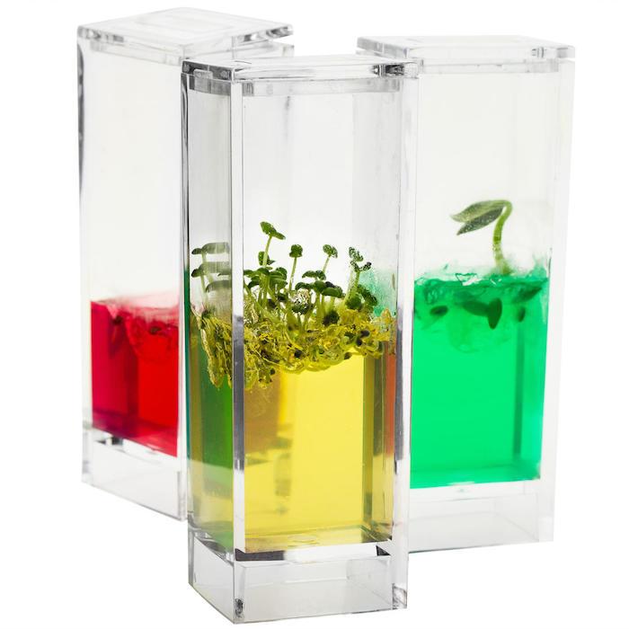 ein plantarium mit grünen pflanzen idee für geschenke für die beste freundin