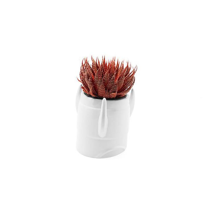 ein weiér blumentopf mit einer roten pflanze ideen für geschenke für die beste freundin