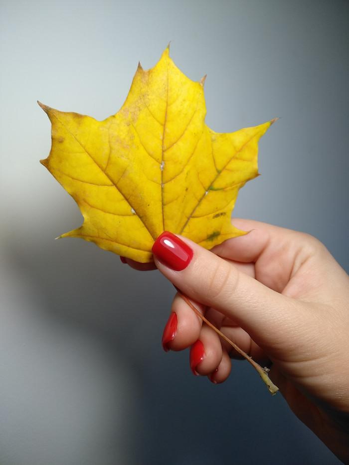 eine graue wand eine hand mit einem roten nagellack ein großes gelbes blatt ideen für nageldesign herbst