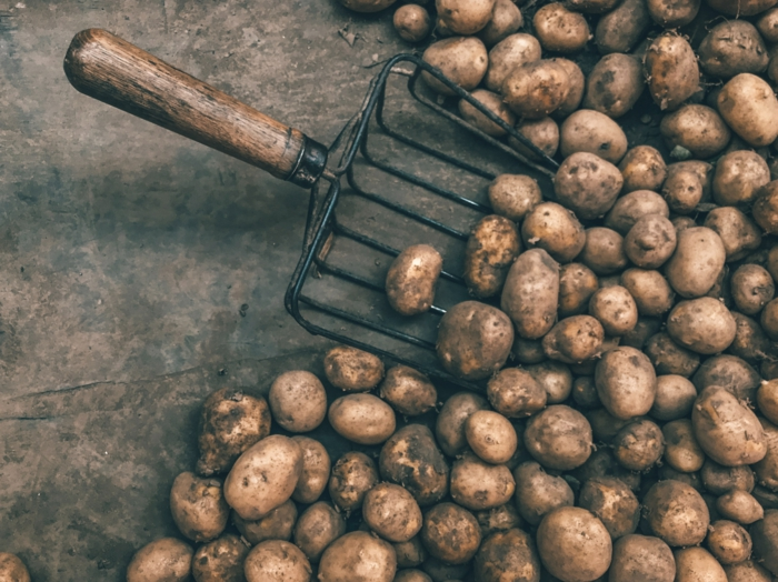 kartofeelszppe zubereiten einfach sorten kartoffeln mehlig kochende kartoffeln