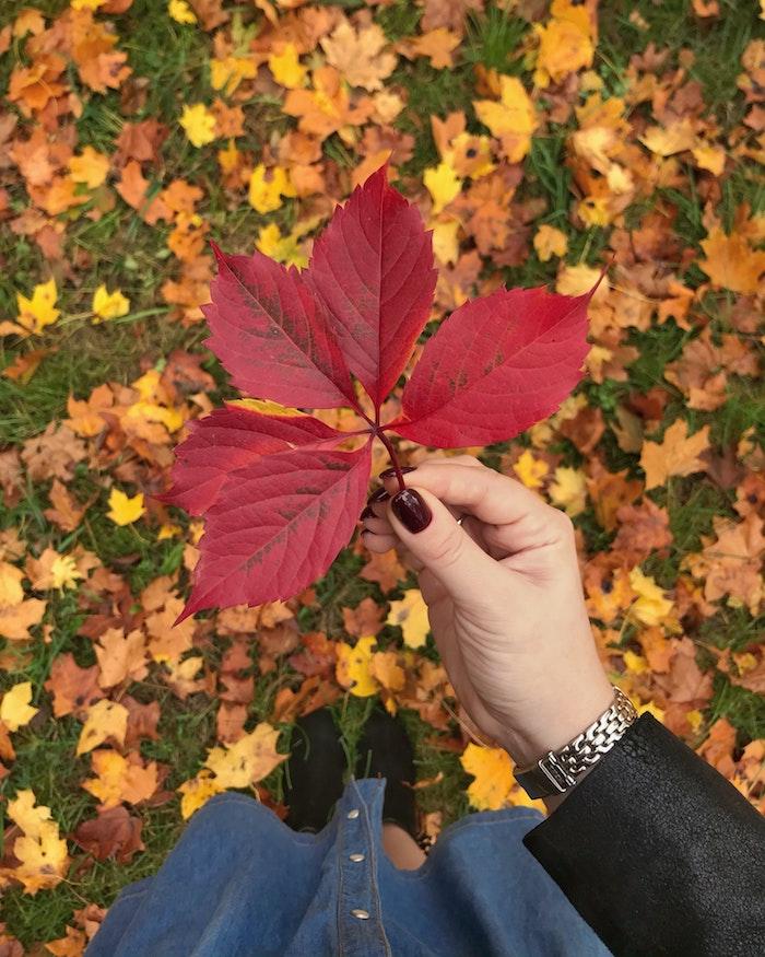 rote große herbstblätter ein grüner ast und gelbe blätter frau mit nageldesign herbst hand mit uhr