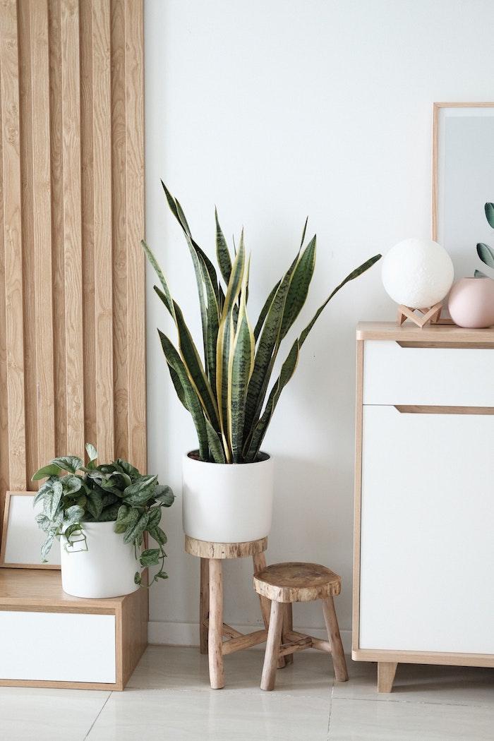 weiße vase große grüne pflanze kleine runde stühle aus holz große holzkommode innenausstattung 2020 inspiration wohnzimmer einrichten modern minimalistische einrichtung