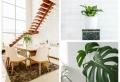 Die besten Zimmerpflanzen für ein wohnliches Ambiente