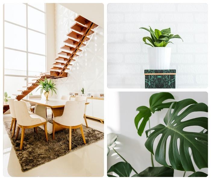 die besten zimmerpflanzen wohnung dekorieren grüne pflanzen natur zuahuse