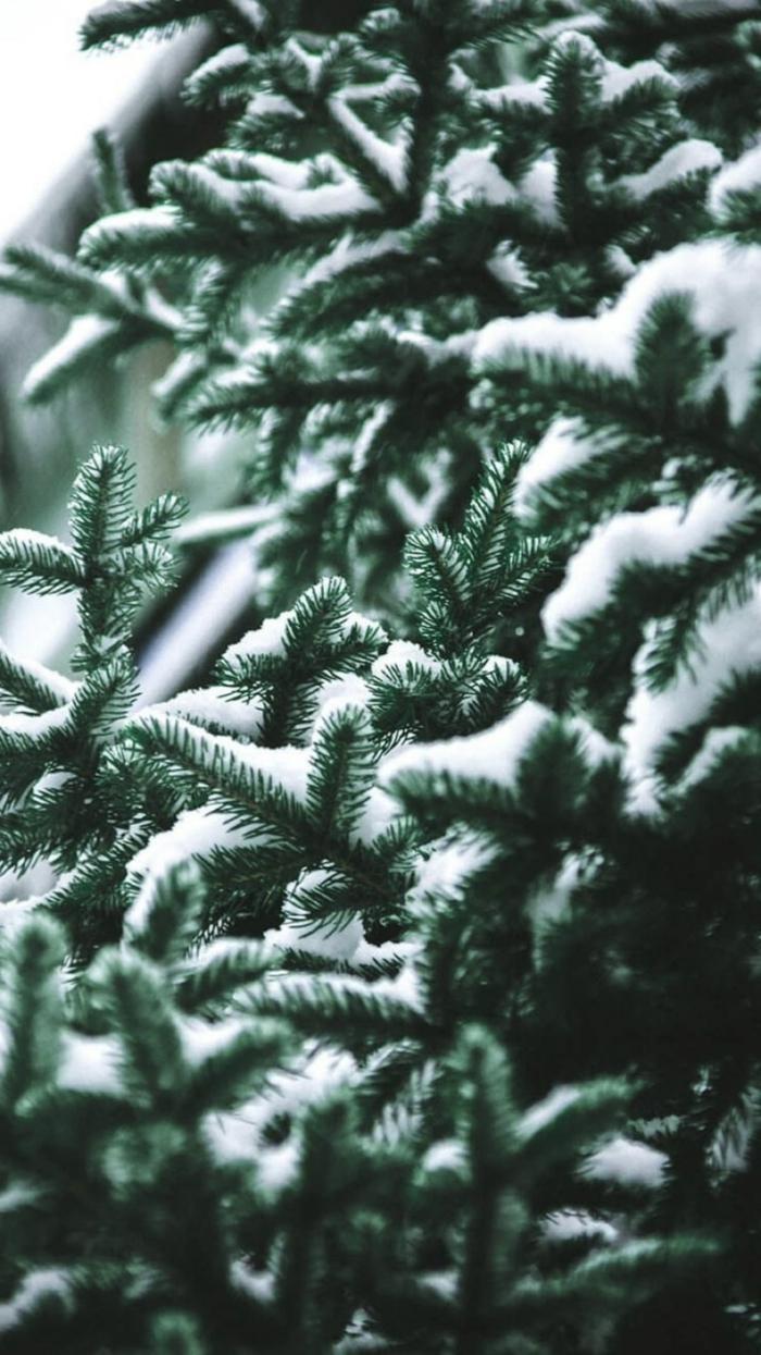 grüner tannenbaum bedeckt mit schnee adventsbildeer kostenlos herunterladen hintergrund handy bilder kostenlos