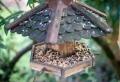 Vogelschutz-Tipps für den heimischen Garten