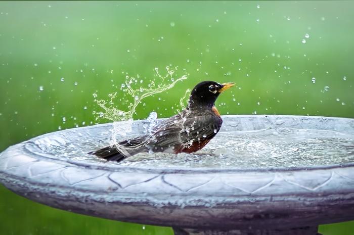 vogelschtuz tipps und ideen kleiner vogel im vogeltränke aus stein