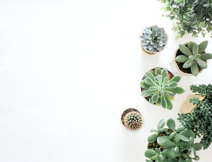 zimmerpflanzen als deko wohnung dekorieren dekoideen fürs zuhause sukulenten kleine grüne pflanzen