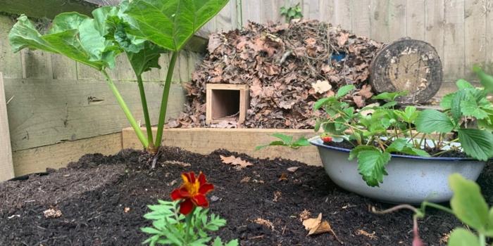 katzensicheres igelhaus bauen igel überwintern igelhaus im garten verstecken unter blätter zwiege