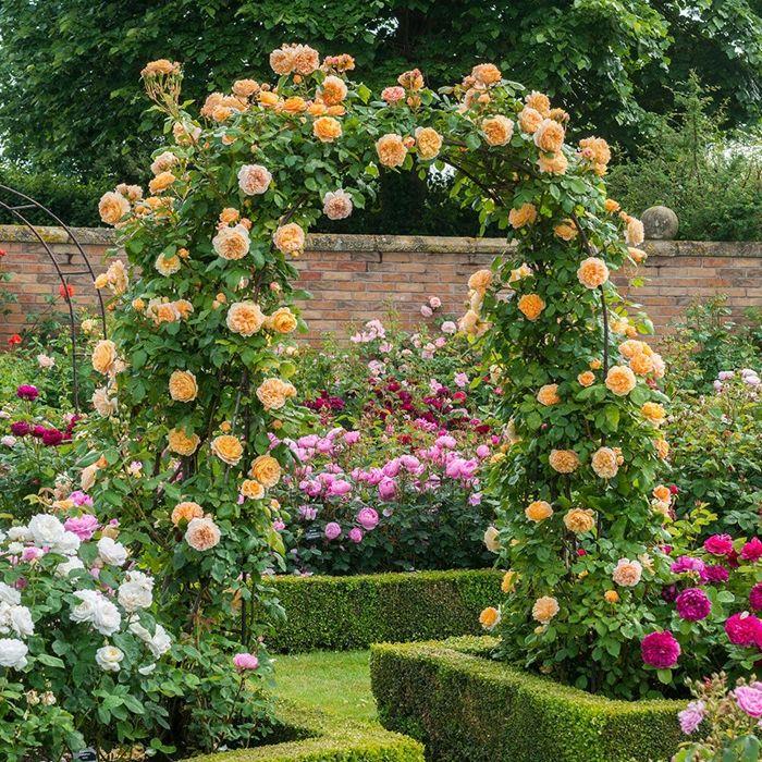 rosen richtig schneiden deko mit blumen im garten gartendeko ideenn gartengestaltung