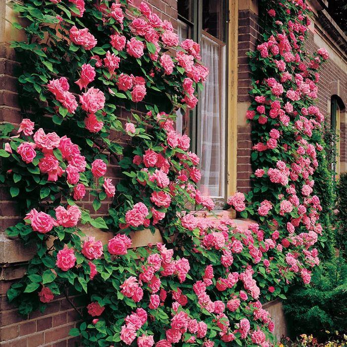 rosen schneiden frühjahr rosa blumen atemberaubende gartendeko tipps für gärtner und hobbygärtner