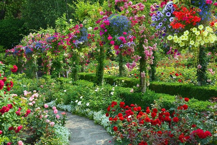 rosen schneiden frühjahr schritt für schritt garten gestalten gartendeko ideen gartenblumen