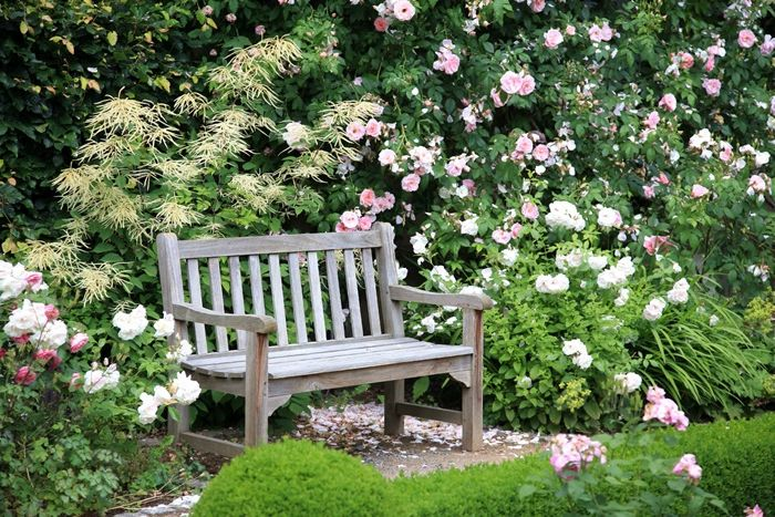 verblüffende rosen abschneiden garten bepflanzen und pflegen pflegetipps gartenbank