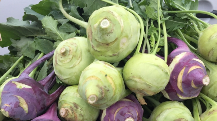 viele grüne und rote kohlrabi gerichte mit kohlrabi rezepte