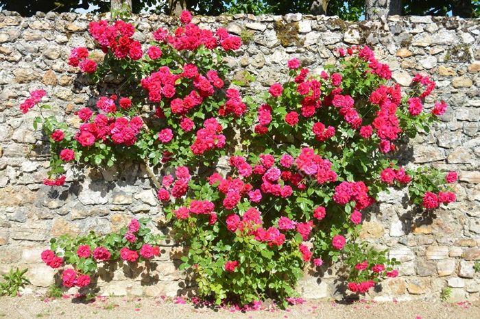 wann schneidet man rosen blumen in form von herzen gartenzaun deko gartendeko