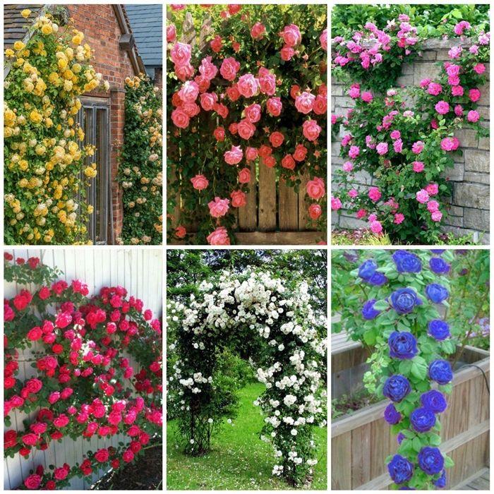 wann schneidet man rosen gartenblumen ideen gartendeko beispiele garten bepflanzen