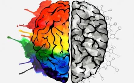 was sind nootropika wichtige infos gehirn stimulation medikamente