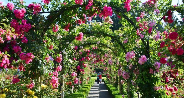 wie schneidet man rosen bogen mit blumen wunterschöner garten gartendeko ideen