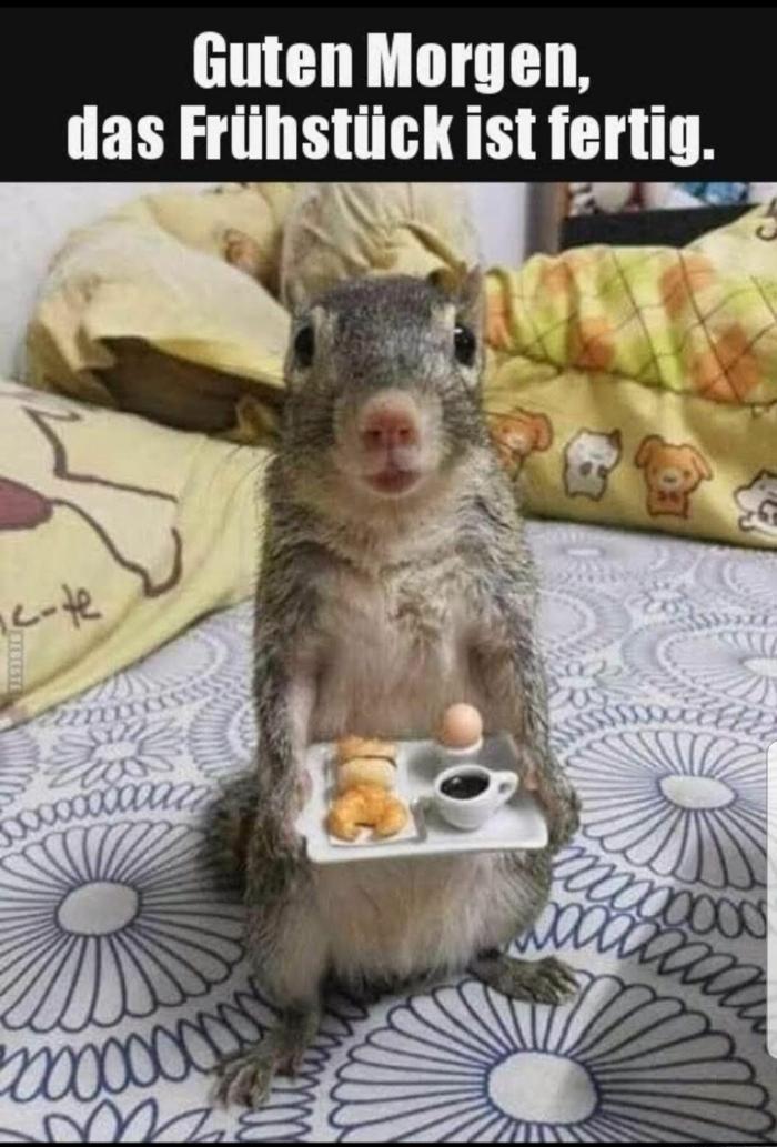 eichhörnchen mit frühstück witze lustige sprüche bilder kostenlos zum totlachen gute morgen stimmung