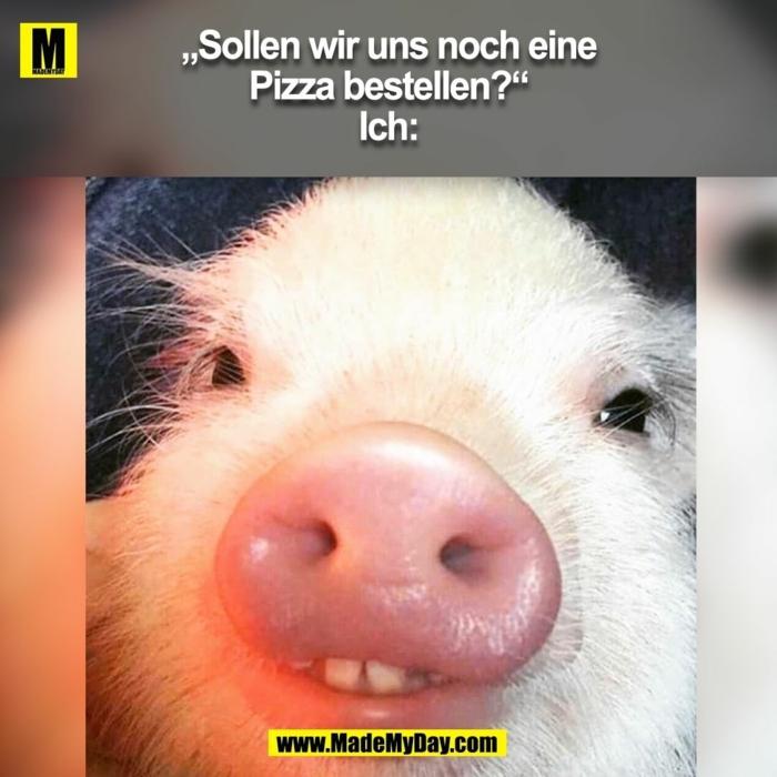 foto von der schnauze eines kleinen schweinchens witzige lustige sprüche bilder kostenlos gute laune