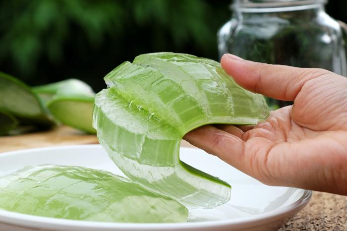 geschnittene aloe vera pflanze gel aloe vera gel haare diy rezepte zu hause schönheit und gesundheit