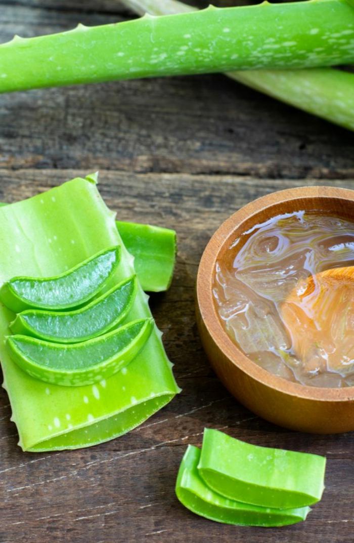 grüne pflanze aloe vera stücke schüssel mit gel aloe vera pflege für den körper