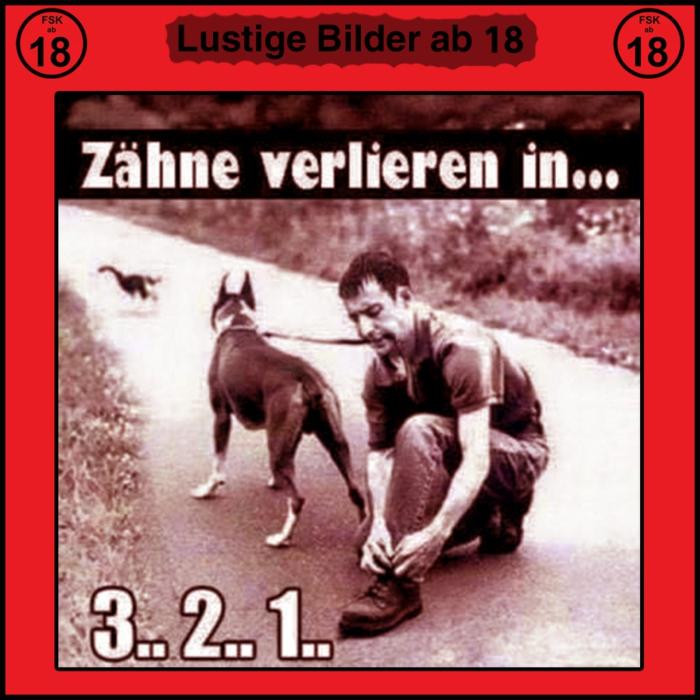 hundebestizer hält leine im mund bindet seine schuhe witzige bilder zum totlachen kostenlos lustige tiere