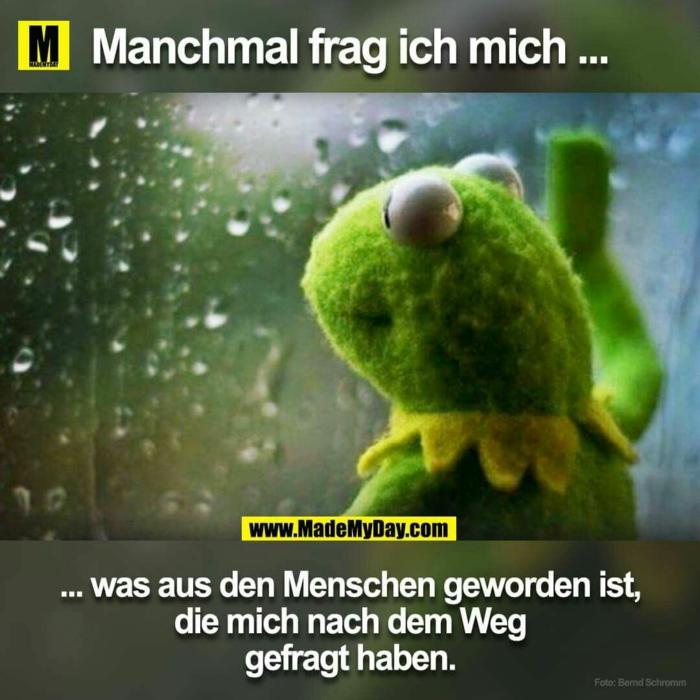 kermit der frosch lustige bilder mit text kostenlos humorvolle witze für gute stimmung