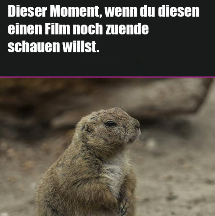 kleiner otter süße tiere lustige fotos witzige bilder zum totlachen bild mit lustigem spruch für gute laune
