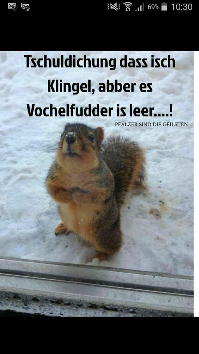 kleines eichhörnchen im schnee süße tiere lustige sprüche bilder zum totlachen gute spannung spaß
