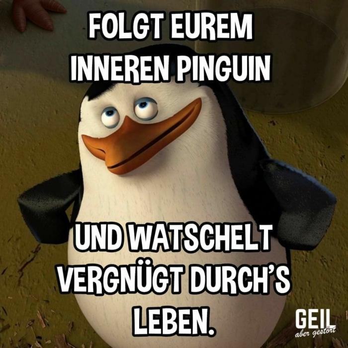 madagascar film pinguin lustige bilder mit text kostenlos folgt eurem inneren pinguin