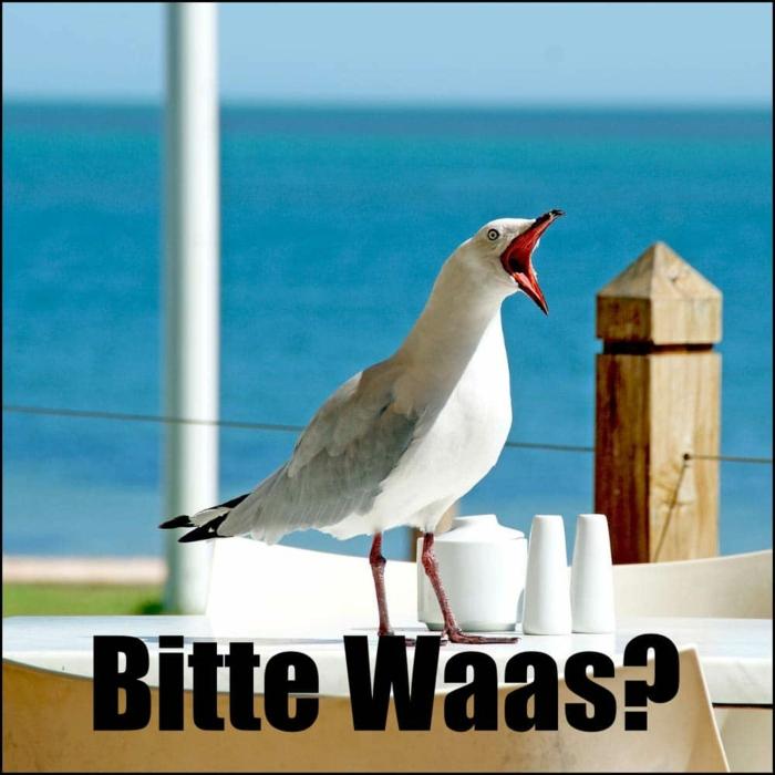 meeresvogel witziges foto von einer möwe am meer lustige bilder mit text kostenlos zum totlachen