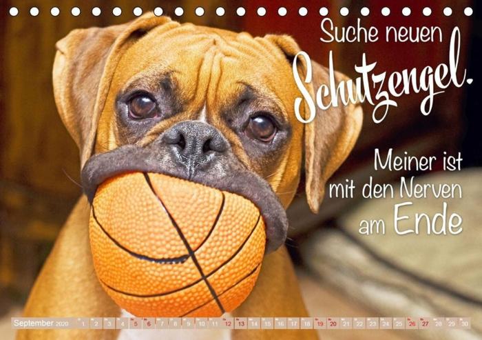 süßer hund mit kleinem basketball im mund lustige sprüche bilder kostenlos die zum lachen bringen