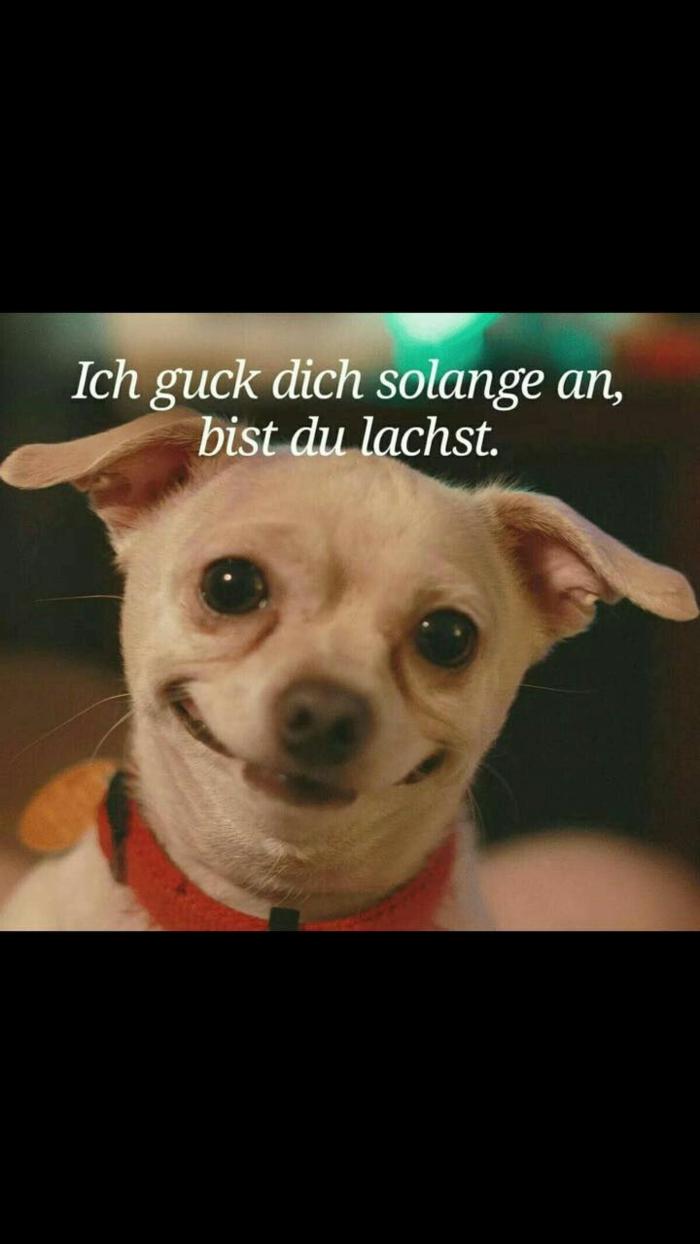 süßer kleiner lachender hund lustige bilder und sprüche kostenlos zum totlachen stimmung verbessern